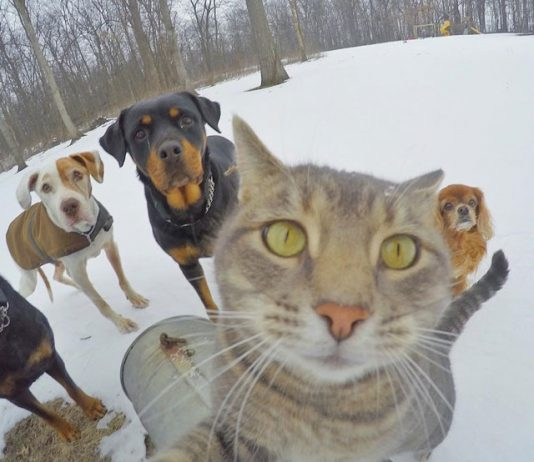 selfie çeken kedi manny